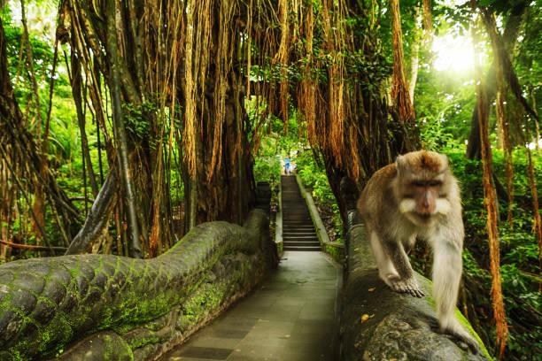 dragon bridge in monkey forest, ubud, bali, indonesia - macaco foto e immagini stock