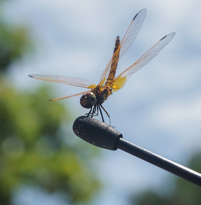 Beautiful dragonfly on blue background