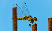 dragon fly perched on iron rod