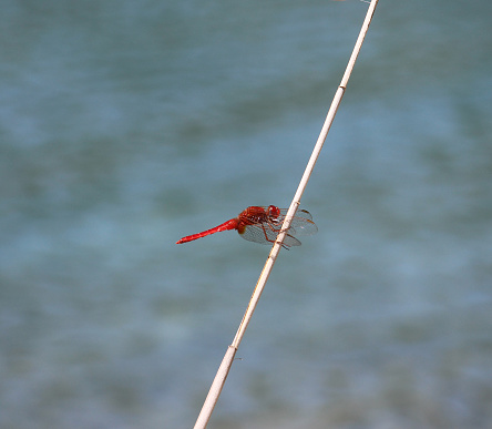 Dragon Fly Stock Photo - Download Image Now
