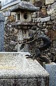 Dragon fountain, Jobonji, Otsu, Japan (portrait)