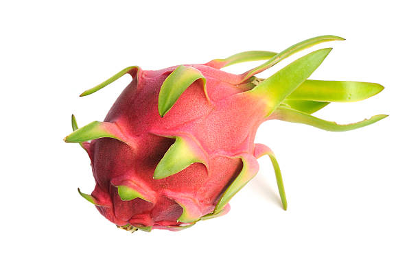 Dragon Fruit Dragon fruit or Pitaya is the plant in Cactaceae family or Cactus. Full of water Green branch and no leaves but sting is the main characteristics of this species. pitaya stock pictures, royalty-free photos & images
