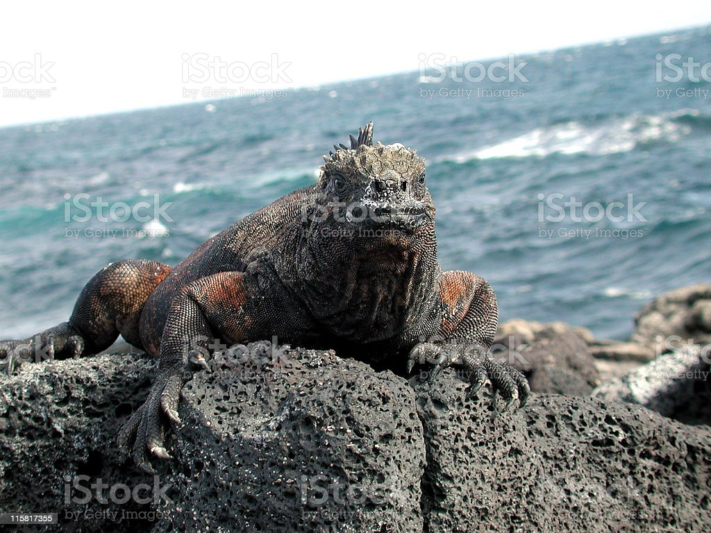 Dragon of the sea royalty-free stock photo