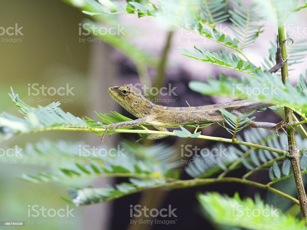 dragon on the tree royalty-free stock photo