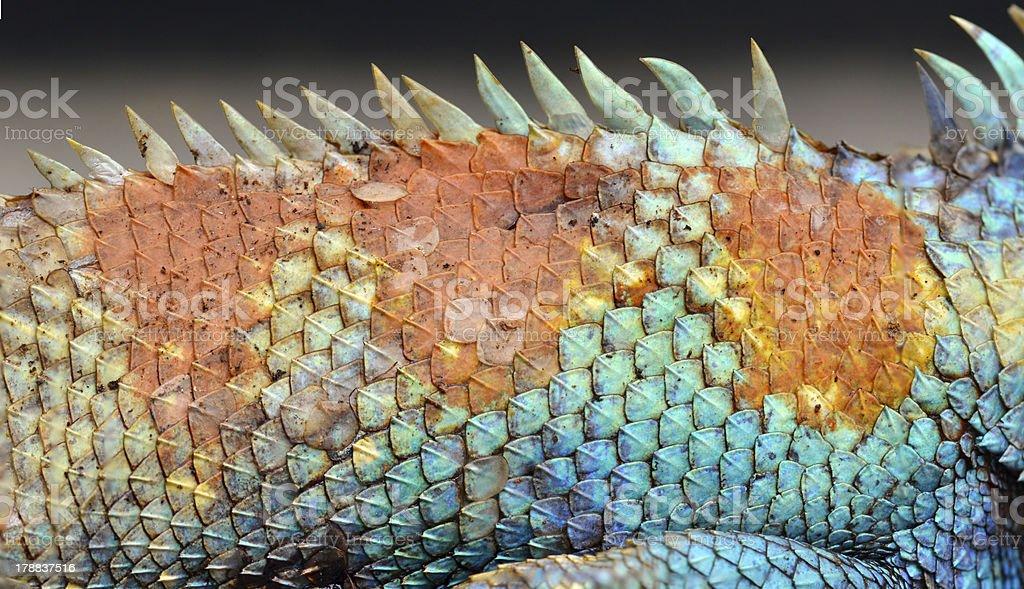 Dragon skin pattern texture background. royalty-free stock photo