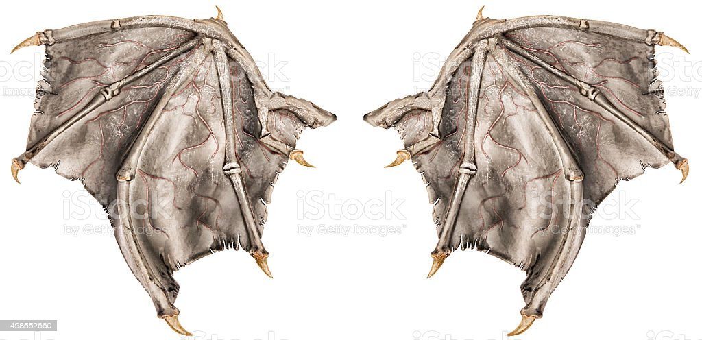 Dragon wings stock photo