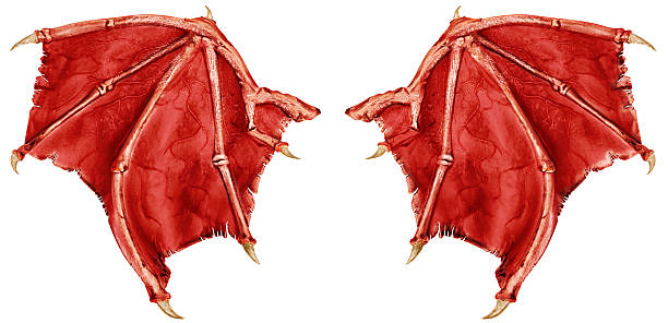 dragon wings - animal wing stock photos and pictures