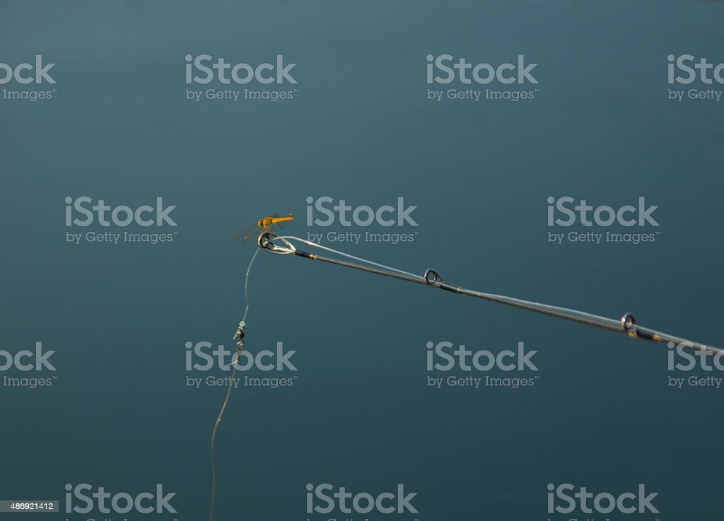 Libellen und Duschstangen – Foto