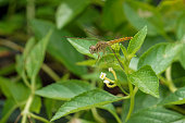 Dragonflies on flowers and green leaves
