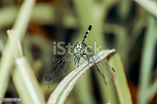 Long tailed insects with four wings
