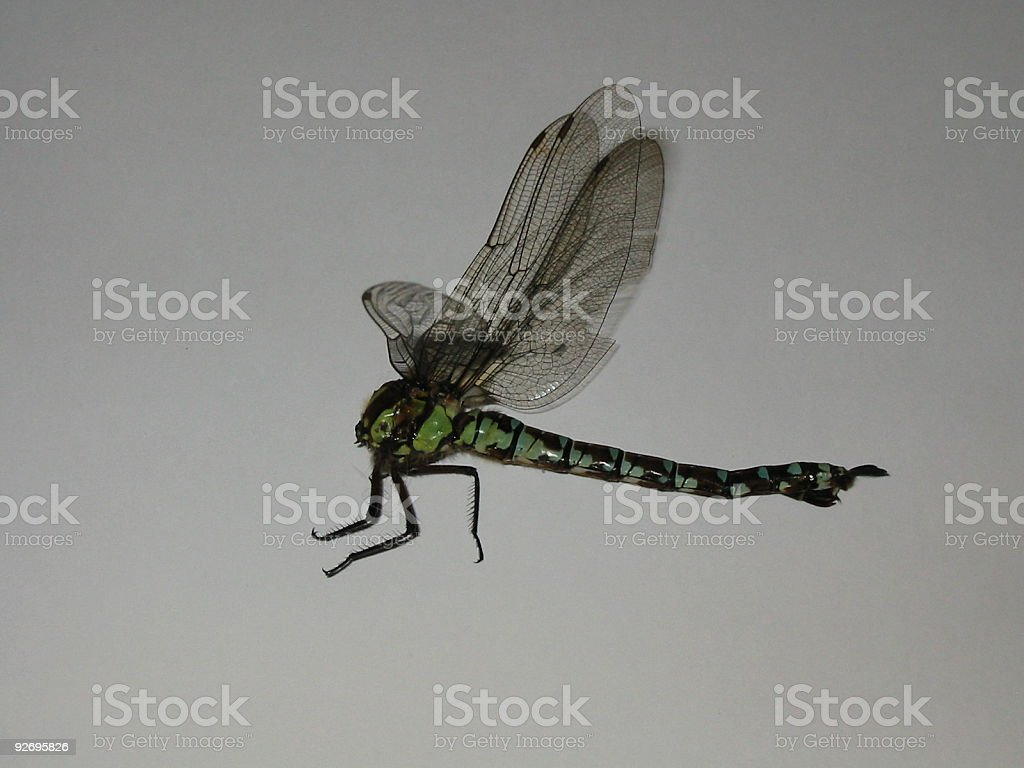 Dragonfly 1 royalty-free stock photo