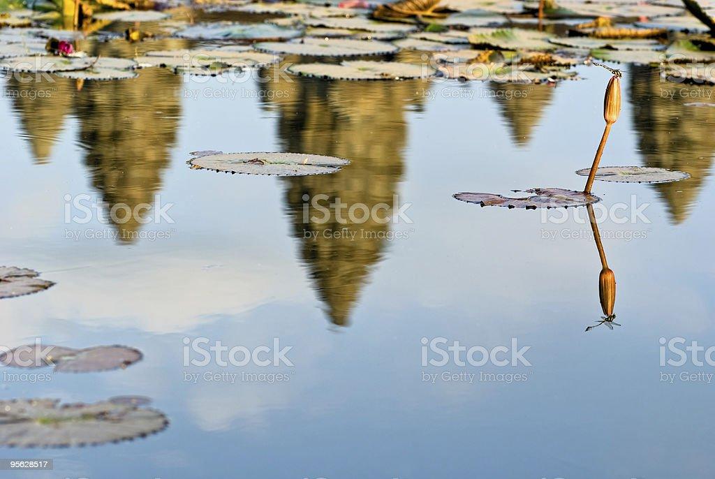 Dragonfly and Angkor Wat at sunset, Cambodia. royalty-free stock photo