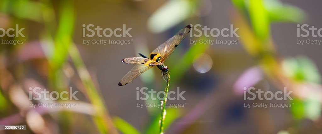 Dragonfly and blur nature stock photo