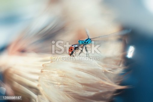 dragonfly and bodysuit on a blue background