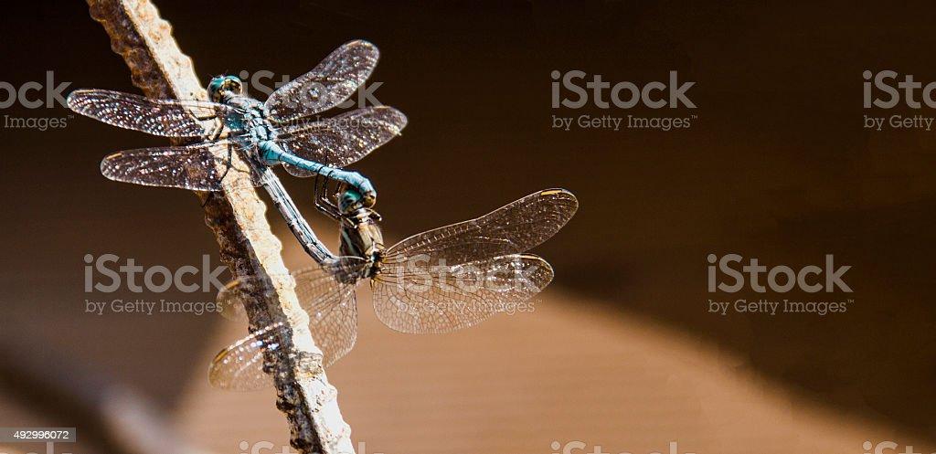 Dragonflys.