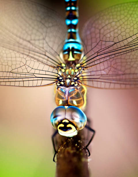dragonfly close up stock photo
