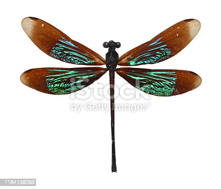 Dragonfly close up isolated on a white background.