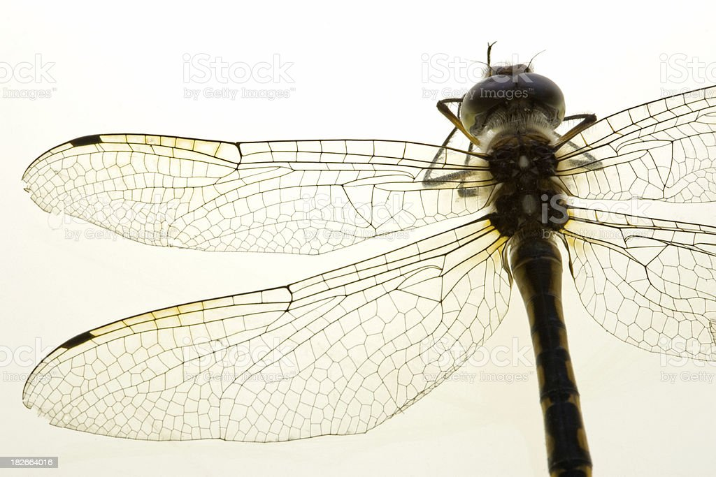 Dragonfly Detail royalty-free stock photo