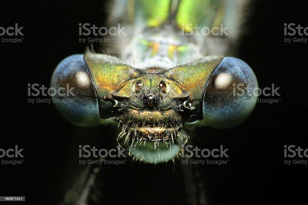Dragonfly Eyes stock photo