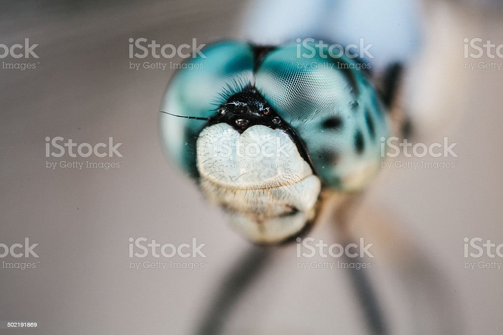 Dragonfly Eyes up close stock photo