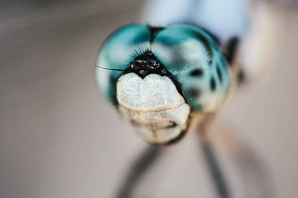Dragonfly Eyes up close stock photo