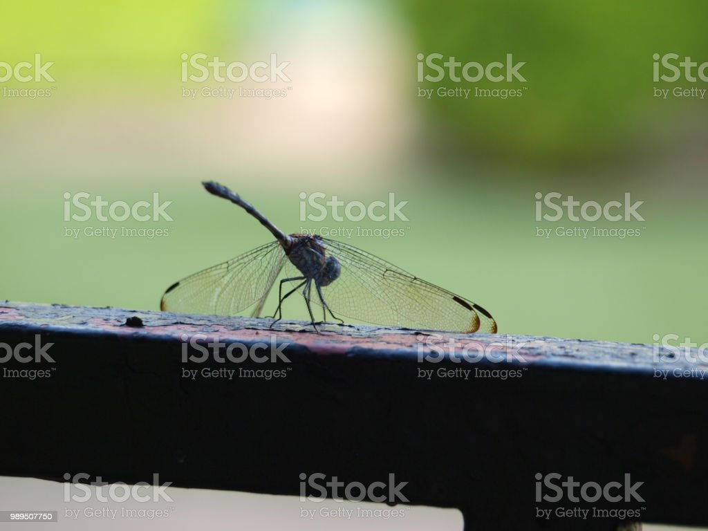 Dragonfly Finds Needed Minerals stock photo