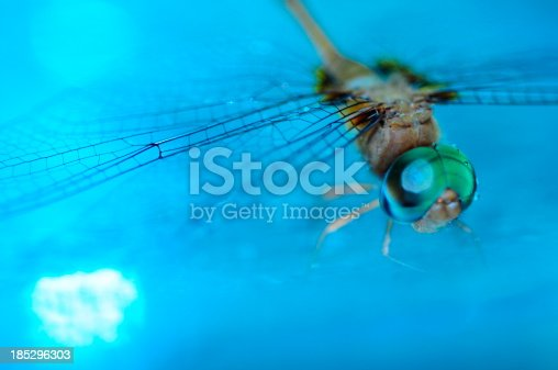 istock Dragonfly in blue water with bokah . 185296303
