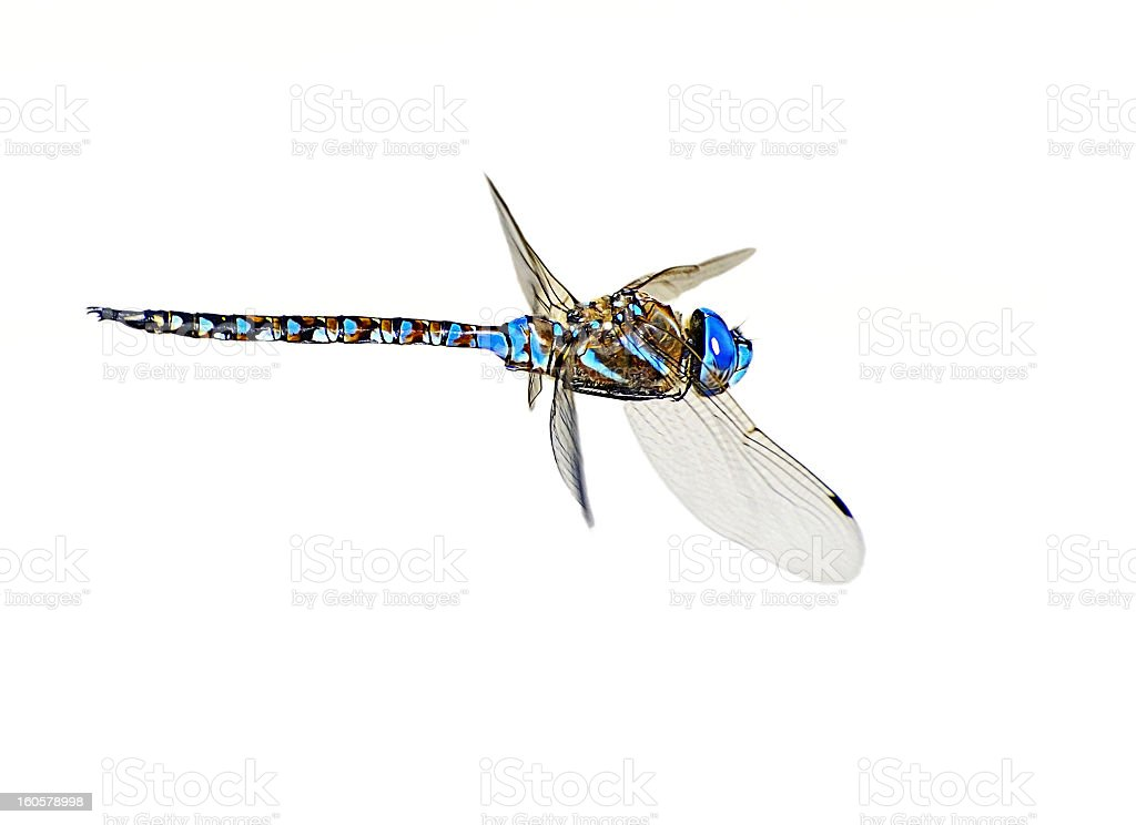 Dragonfly In Flight stock photo