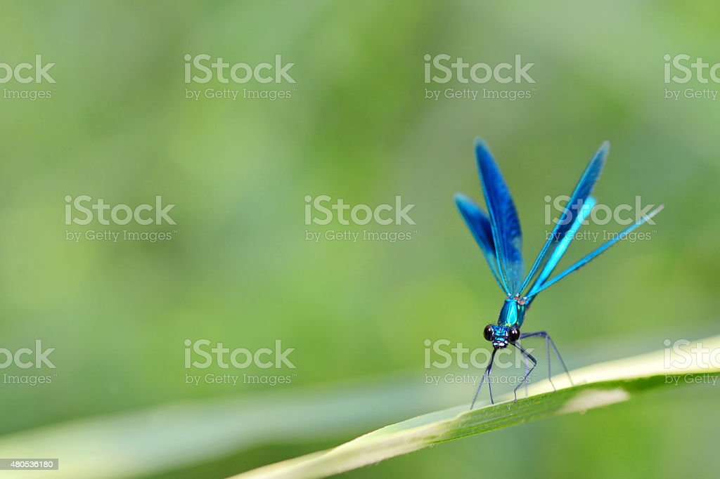 dragonfly in forest stock photo