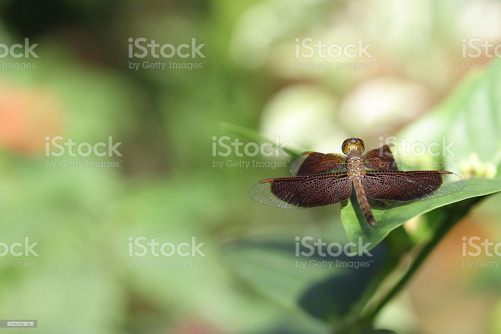 Dragonfly in the wild stock photo