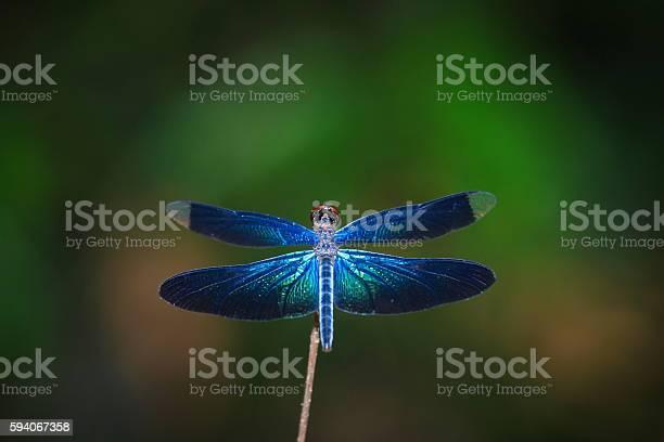 Dragonfly insects nature picture id594067358?b=1&k=6&m=594067358&s=612x612&h=1hs3l u40nn1dcu16l7yn9topcp8hhtc 5yr6fmazhq=