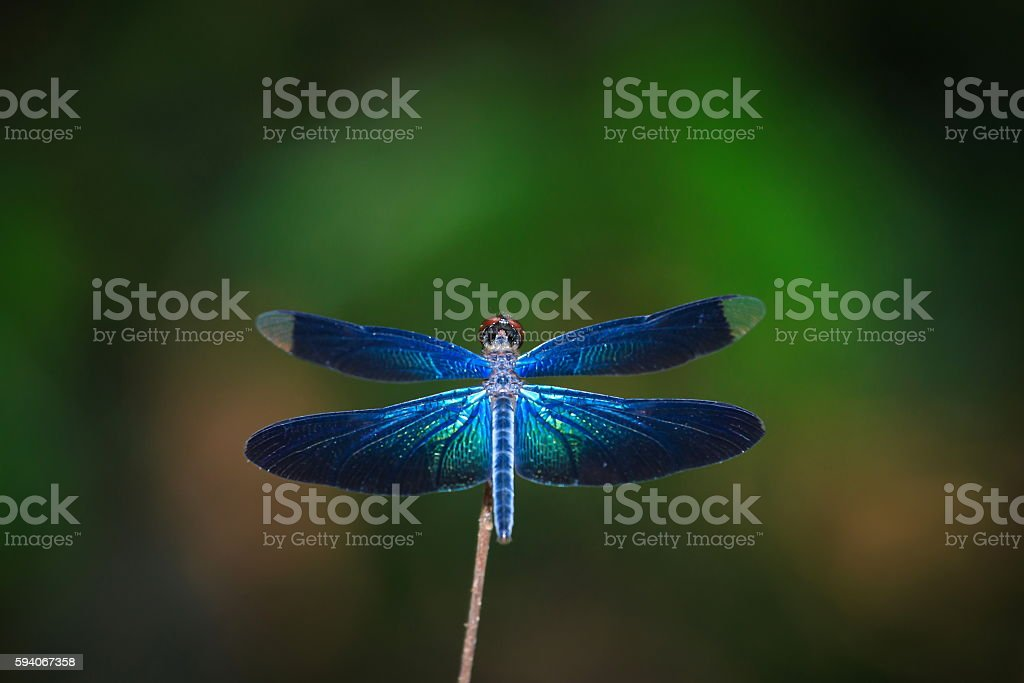 Dragonfly, insects, nature. stock photo