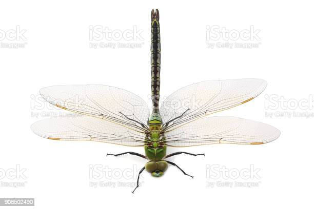 Dragonfly isolated on white background picture id908502490?b=1&k=6&m=908502490&s=612x612&h=cptoaj7apvqjiyydeovevwfspztw9ypxi vcp2ugmyy=