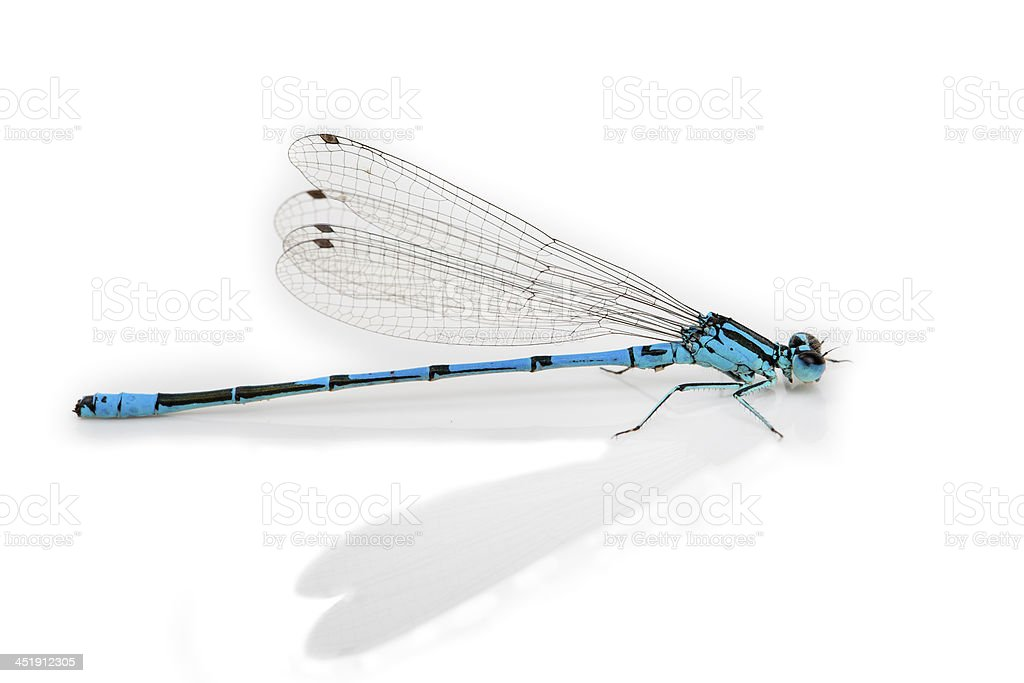 Dragonfly isolated on white royalty-free stock photo