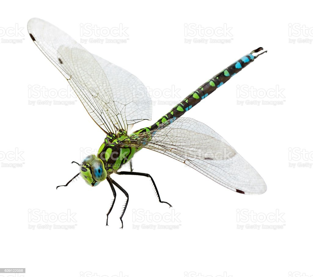 dragonfly isolated stock photo