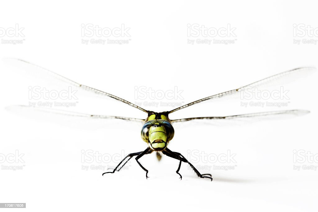 Dragonfly lift off royalty-free stock photo