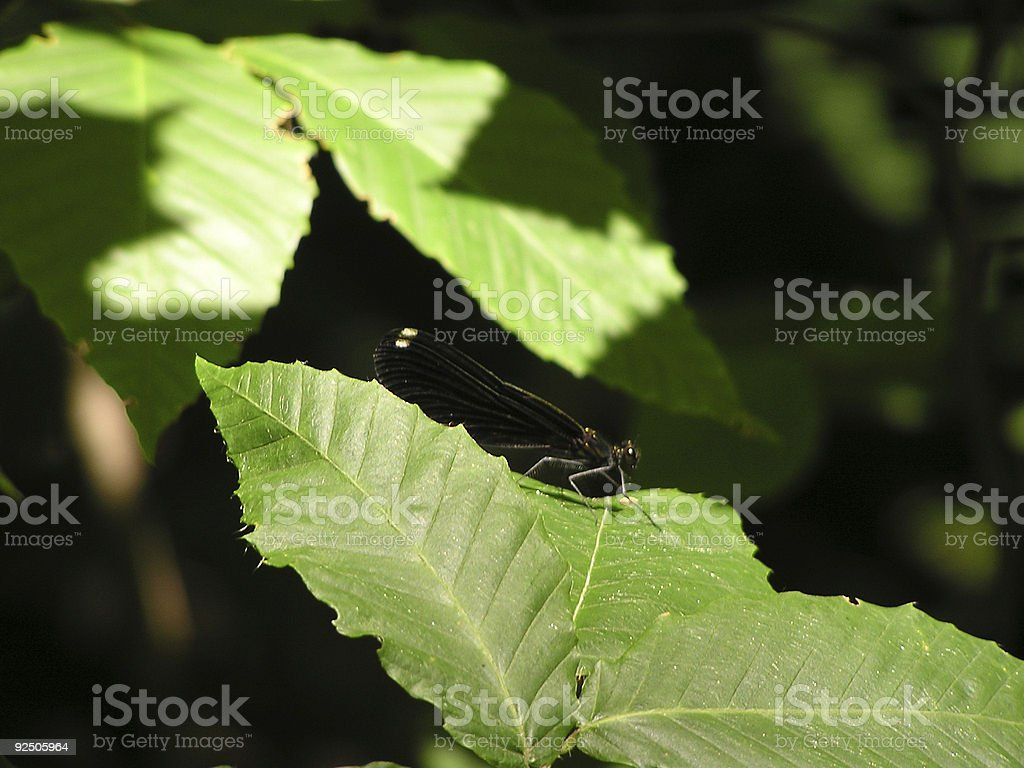 dragonfly on a leaf royalty-free stock photo