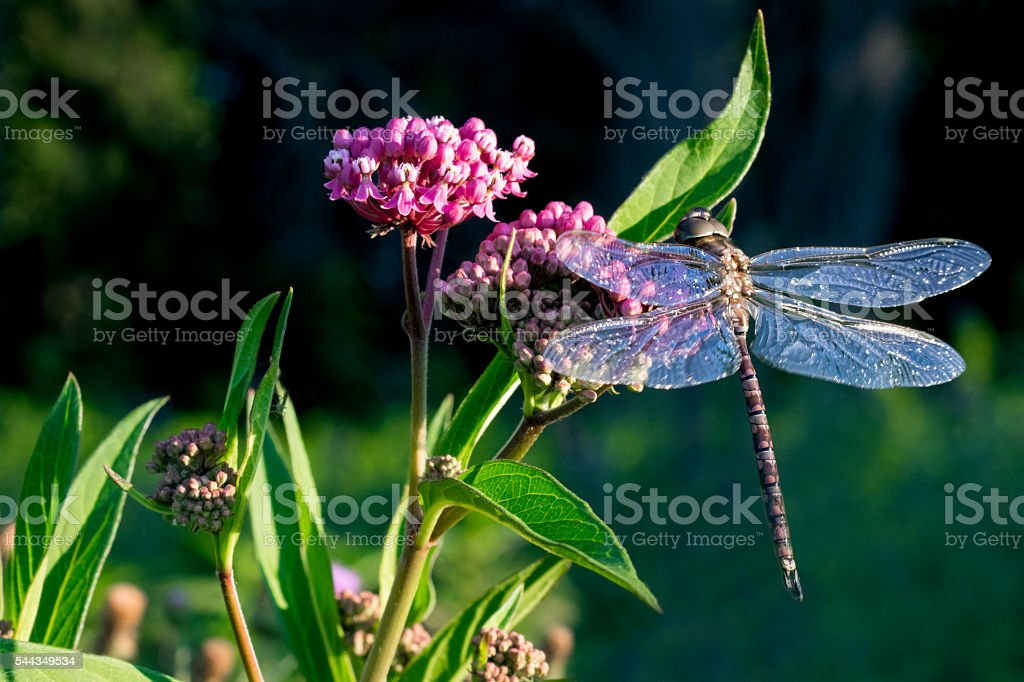 Dragonfly on colorful plant stock photo