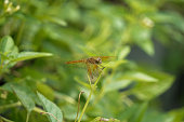 Dragonfly on green branches in the forest