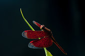 Image of Dragonfly on green leaf with nature dark background.