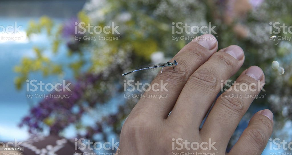 dragonfly on hand stock photo