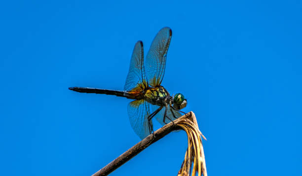 dragonfly on plant horizontal stock photo