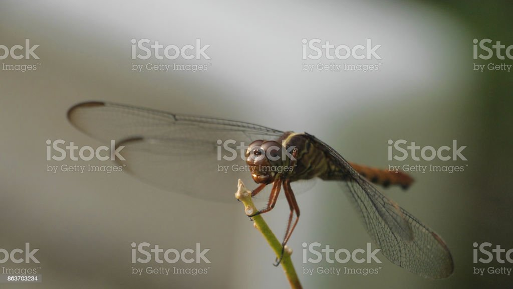 Dragonfly on plant stem stock photo