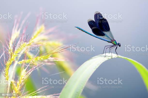 Dragonfly on the leaf dragonfly macro picture id607602718?b=1&k=6&m=607602718&s=612x612&h=2pp6xnw4hwdnz16bqvibqgi4vugdomhqmiuh6dw2 qq=