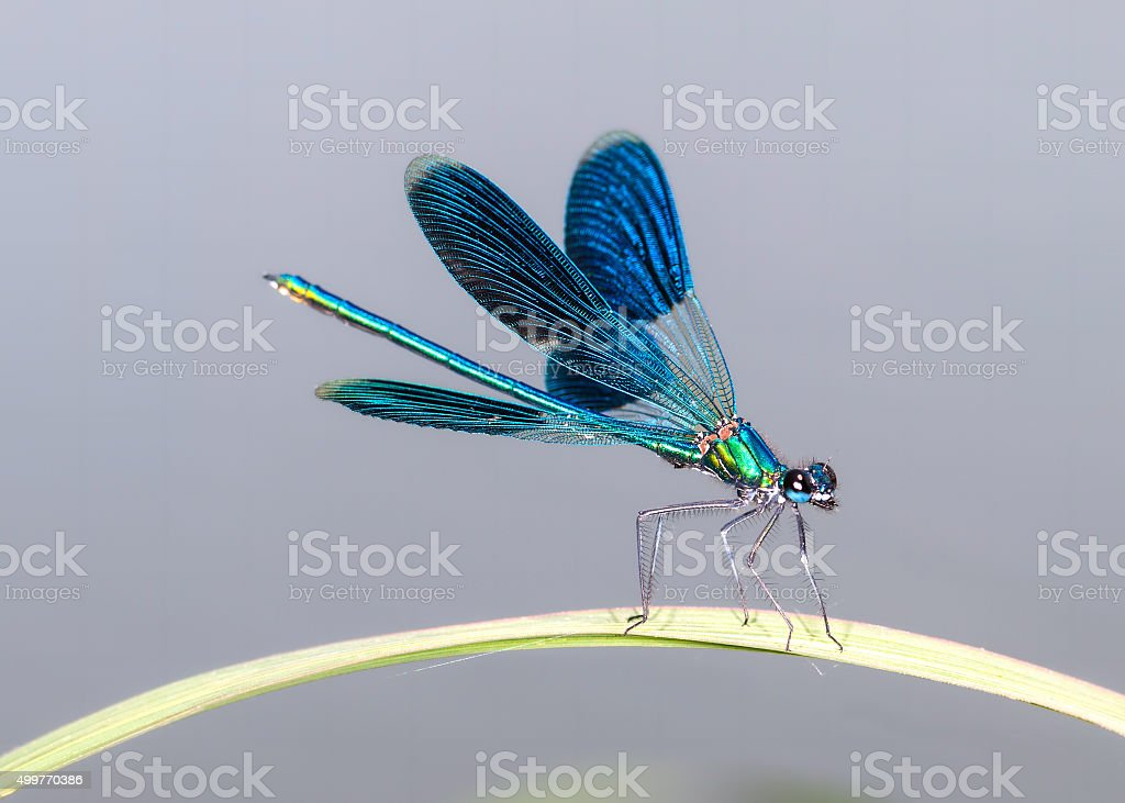 Dragonfly on the leaf stock photo