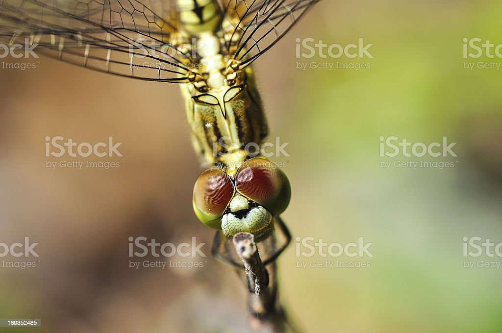 Dragonfly on the Natural. royalty-free stock photo