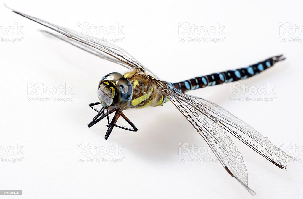 Dragonfly on white isolated background royalty-free stock photo