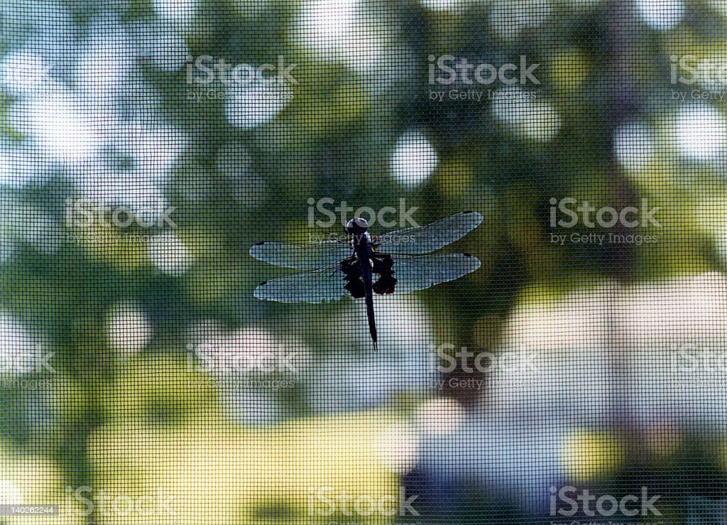 Dragonfly on Window Screen royalty-free stock photo