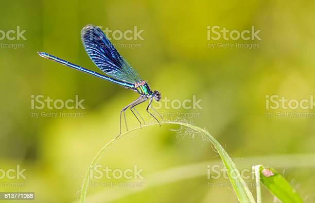 Dragonfly outdoor picture id613771068?b=1&k=6&m=613771068&s=612x612&h=3ldilddieg0ic we28qvjnz5ign5jaxrytu  ctq0pi=