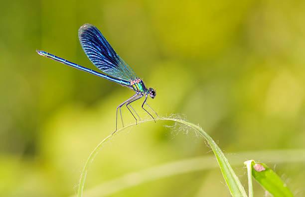 Dragonfly outdoor picture id613771068?b=1&k=6&m=613771068&s=612x612&w=0&h=yhuuroqu4ewg3om16lpz9zssrw0vz5s953k6y1bpgoa=